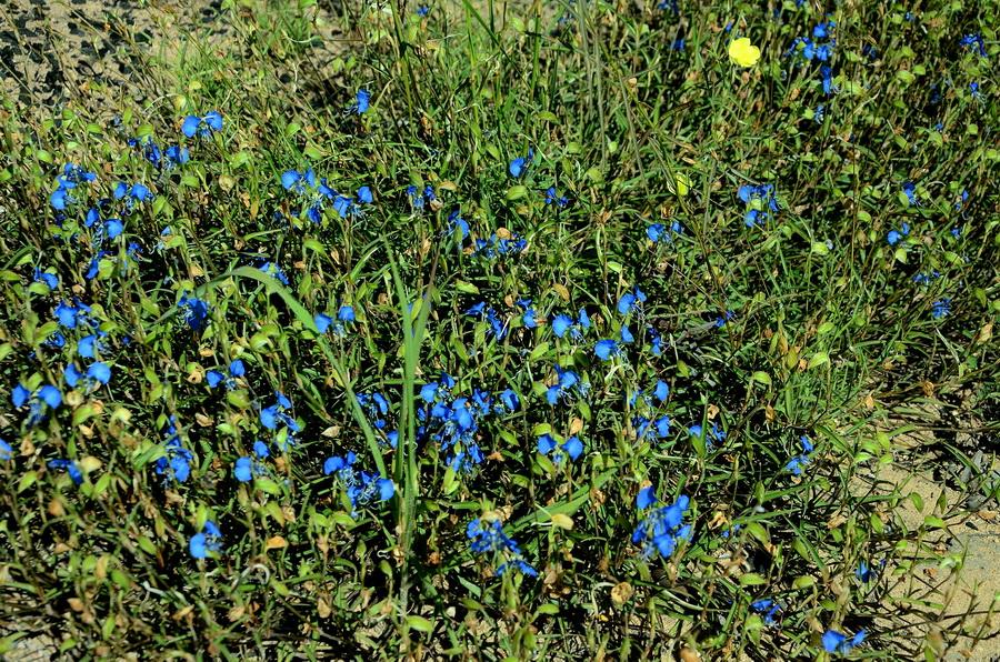 Цветы Ни сало ни мясо — национальный парк Изало на Мадагаскаре Ни сало ни мясо — национальный парк Изало на Мадагаскаре DSC 5649