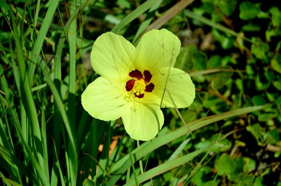 Цветы Ни сало ни мясо — национальный парк Изало на Мадагаскаре Ни сало ни мясо — национальный парк Изало на Мадагаскаре DSC 5693