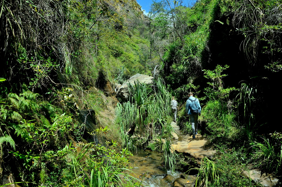Река Ни сало ни мясо — национальный парк Изало на Мадагаскаре Ни сало ни мясо — национальный парк Изало на Мадагаскаре DSC 5766